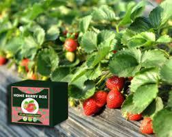 Home Berry Box - test - Kiste - Kommentatoren