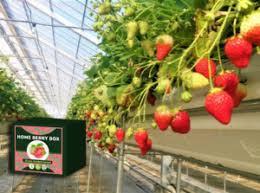 Home Berry Box - bestellen - Bewertung - Amazon