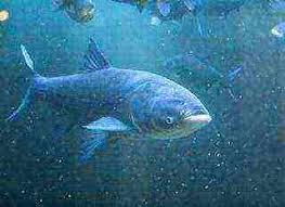 Fish XXL – Fischaktivator - erfahrungen – Deutschland – kaufen