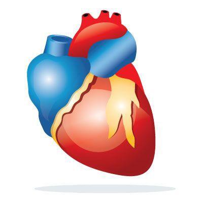 Heart Tonic - kaufen - in apotheke - bei dm - in deutschland - in Hersteller-Website