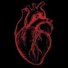 Cardione - anwendung - bewertungen - inhaltsstoffe - erfahrungsberichte
